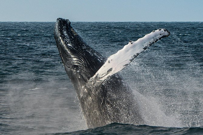 Boa Vista: Whale Watching - half day