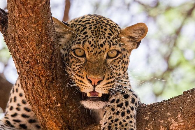 3 Days Masai Mara Budget Group Safari