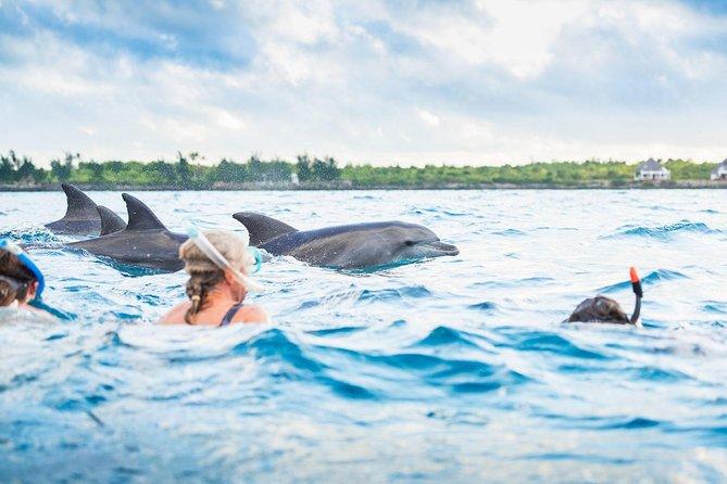 Zanzibar Dolphin Tour unforgettable Experience!