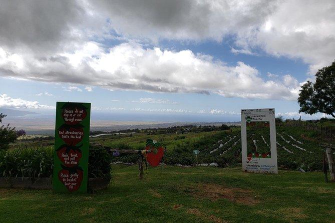 Maui Tour : Private Road to Hana