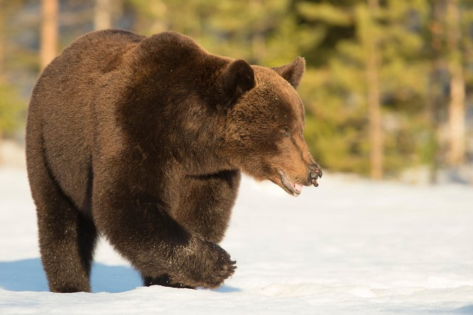Bear Photography on Spring Winter