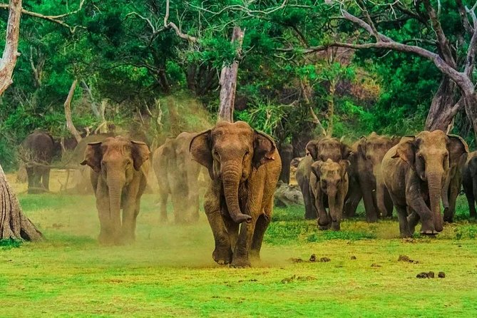 Experience in Wildlife Safari - One Day Excursion in Udawalawa National Park