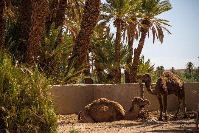 3 days from Errachidia to the desert of Merzouga