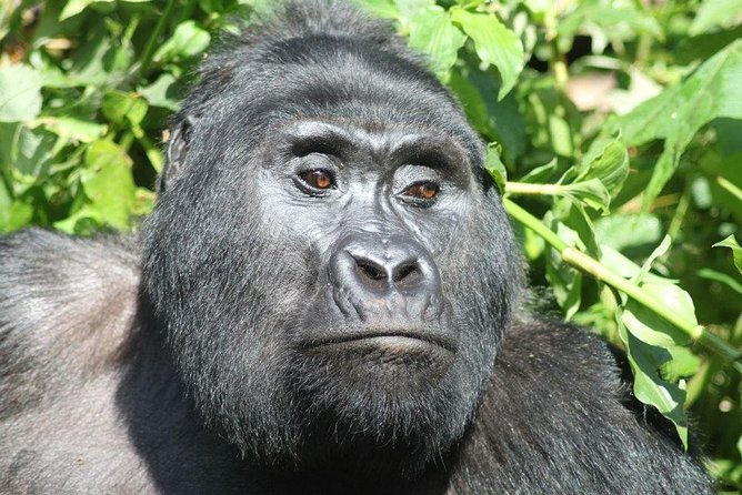 8 Day Uganda - Rwanda Gorillas and Big Game Safari