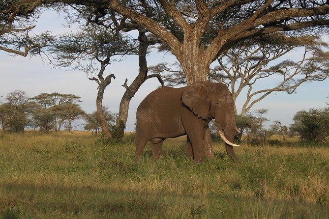 2 days Tanzania luxury safari to Tarangire and Ngorongoro