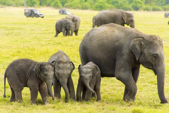 Hire A Sedan for your tour in Srilanka for just $40 (Per Day) | Revro Travels