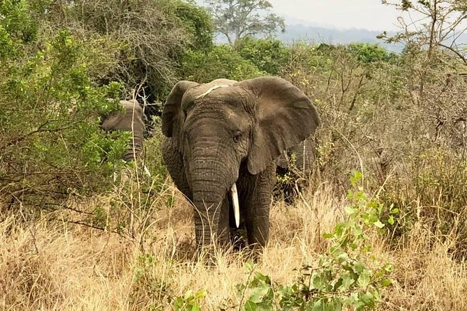 Akagera National Park Full Day Private Tour