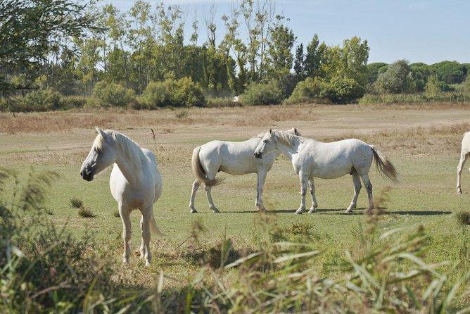 Camargue 4x4 Safari Day