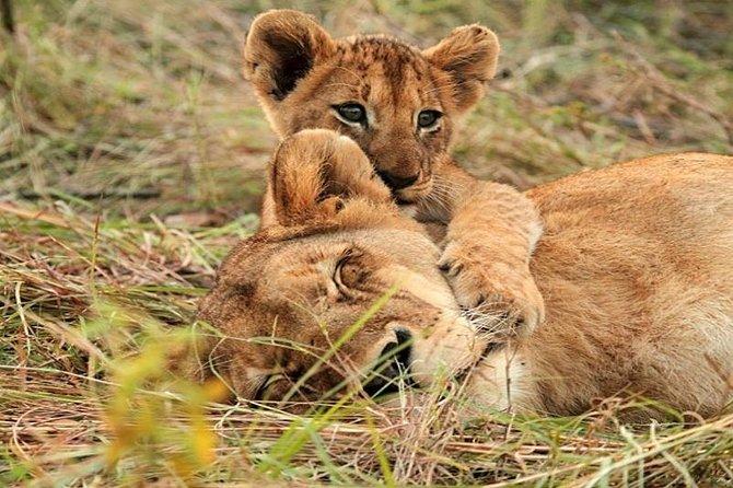 3 Day 2 Night Tsavo East NP and Amboseli Joining Safari