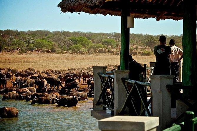 3 Days 2 Nights Manyatta camp- Tsavo East