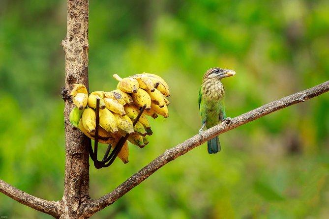 Private North Goa Bird Watching Tour