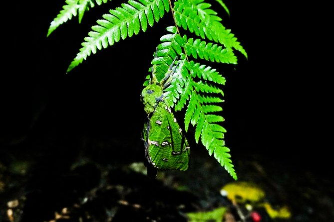 Glow Worms Tour - Nocturnal Rainforest Walk - Small Group