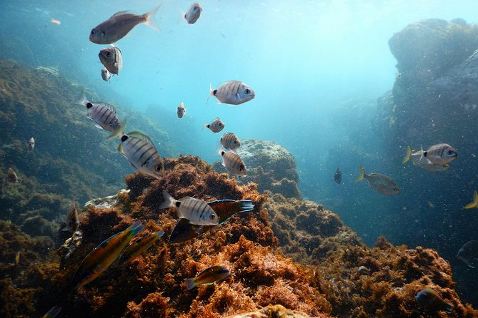 Snorkeling Wildlife in the Azores, Teceira Island | OceanEmotion