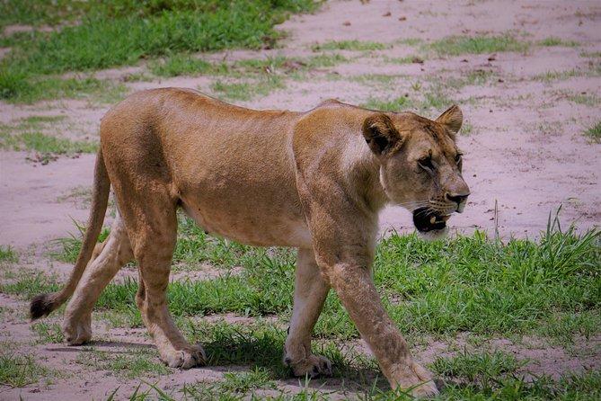 13D/12N Arusha National Park | Tarangire | Lake Manyara | Serengeti | Ngorongoro