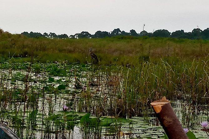 1 day Mabamba shoebill tracking in Entebbe