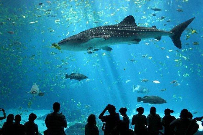 SEA LIFE Ocean World at Bangkok Admission Ticket