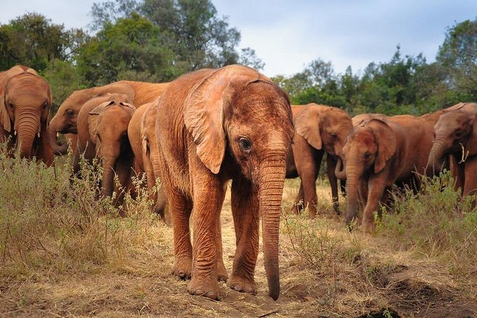 Half-Day David Sheldrick Wildlife Trust - Elephant Orphanage Tour from Nairobi