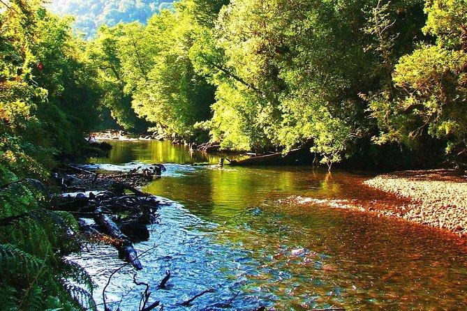 Alerce Andino Parque Nacional.