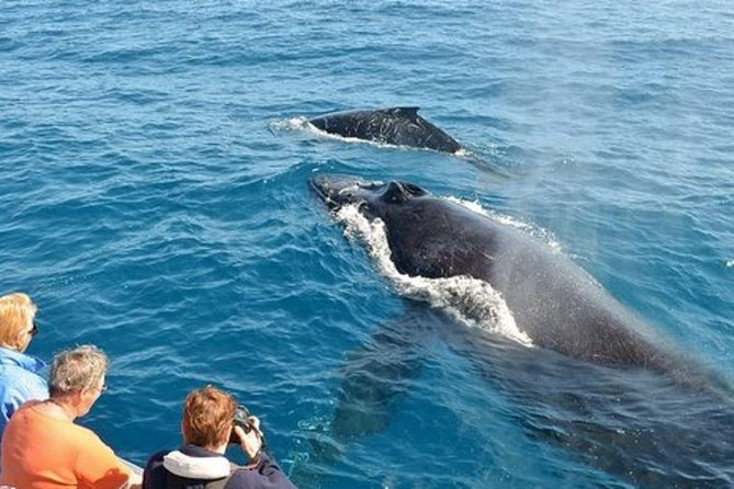 Plenty of whales dating how to chat online dating tips