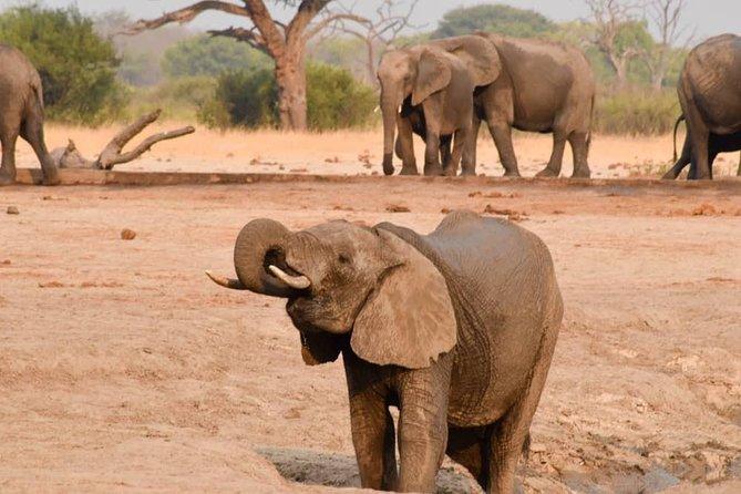 Wildlife and nature, Victoria Falls, Hwange, Chobe day trip 6 nights.