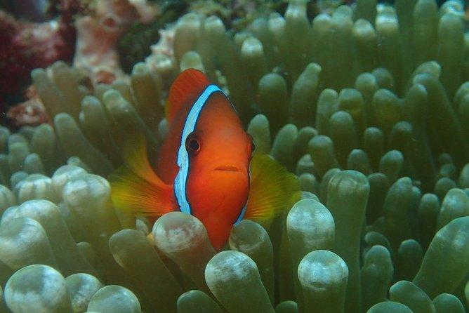 Fun Diving In Boracay