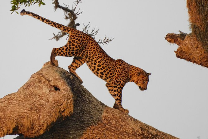 Yala National Park 7 Hours Morning Safari