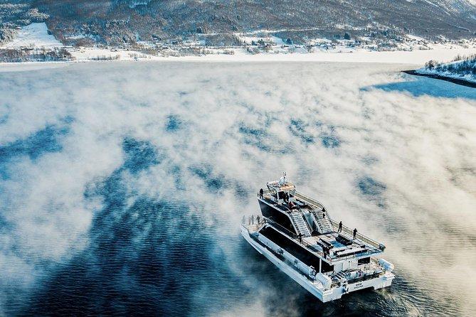 Tromso Fjord & Wildlife Cruise
