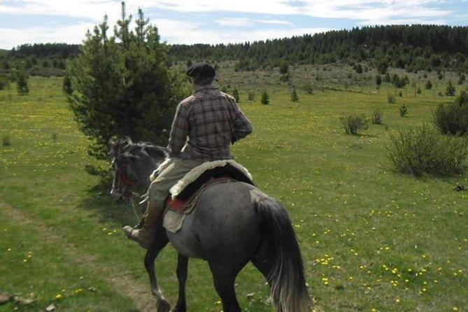 Haneck horseback riding