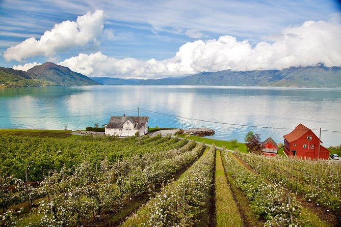 AMAZING HARDANGER: Private round trip with Fjord Cruise – from Bergen, 11 hours