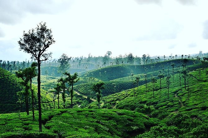 Hill Station Tour from Coimbatore to Valparai