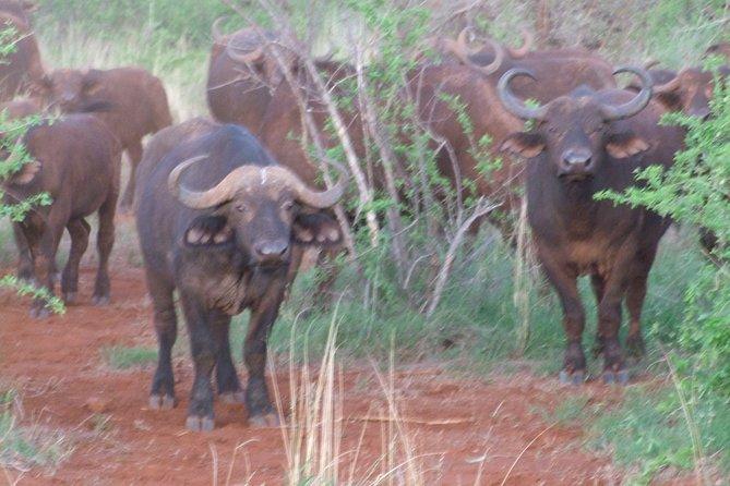 1 Day Red Elephant Safari