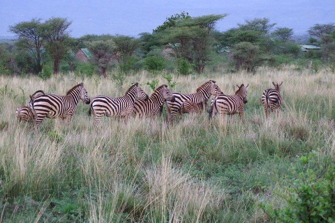 4 days Tsavo East, Amboseli and Tsavo West