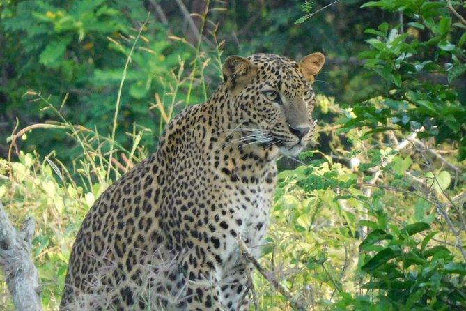 Yala National Park 5 hour Safari Tour - 2 Sessions