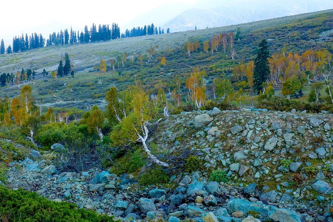Srinagar to Sonamarg Full Day Excursion