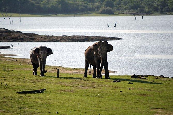 Private Trip Buduruwagala and Udawalawe Safari from Tangalle