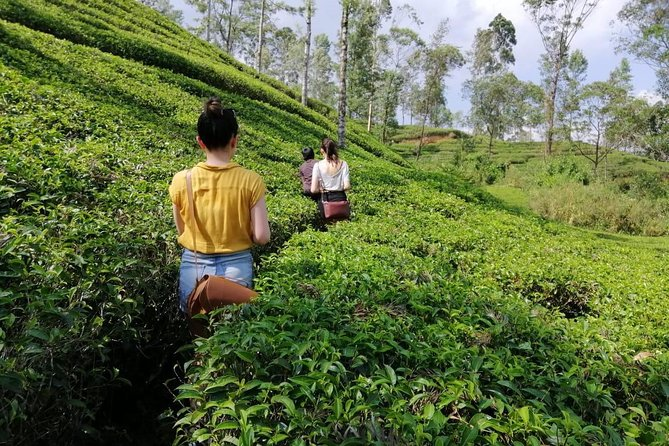 14 Days Private Tour Highlights of Sri Lanka from Negombo