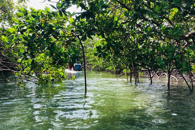 Mangrove Tunnels Eco Tour (Paddle Board & Kayak)