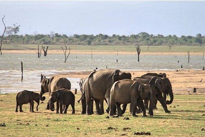 Udawalawe Safari Day Tour From Induruwa