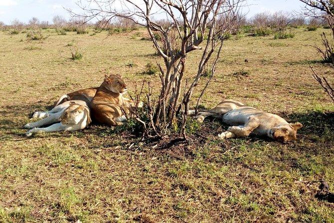 Ngutuni Concervancy 2 Days Safari from Mombasa Beach
