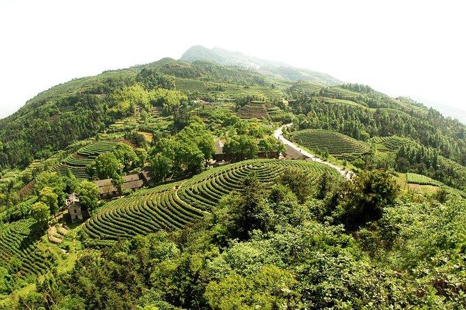 Private Tea Mountain and Bamboo Sea Day Tour