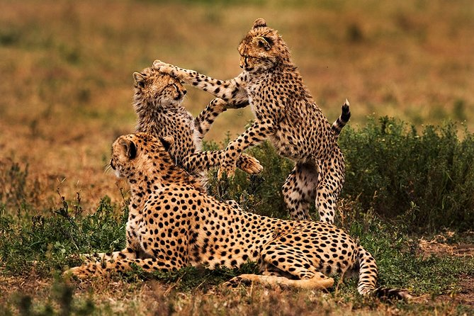 4 days Serengeti and Ngorongoro Crater Tanzania Tour