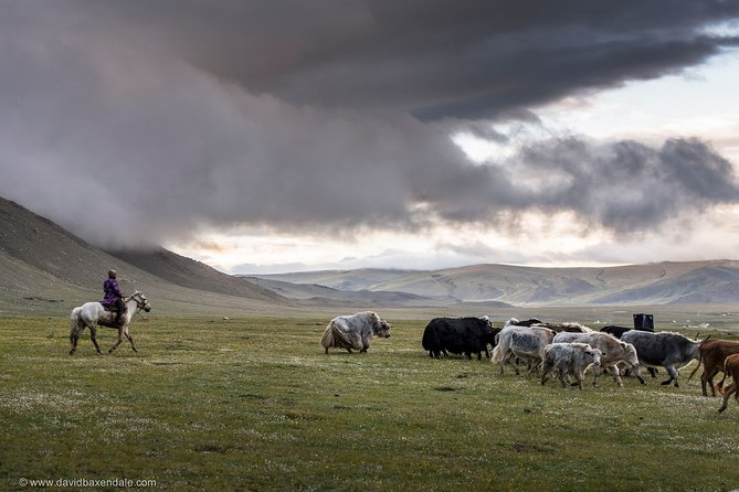 8-Day Private Tour of Altai Tavan Bogd Park and Kazakh Nomads