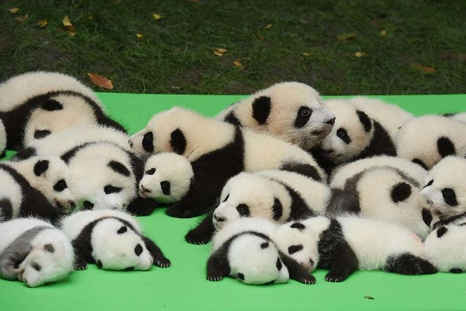Private Chengdu Highlights Day Trip: Panda Base and City from Chongqing by Train