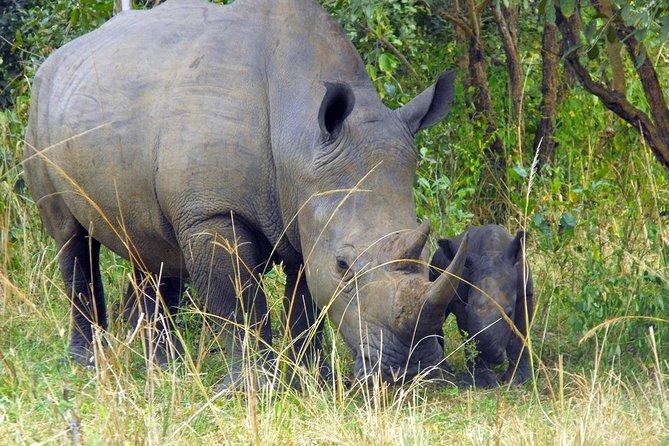 Private Full-Day Tour to Ziwa Rhino Sanctuary
