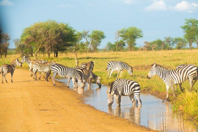 7 Days Lodge Safari.