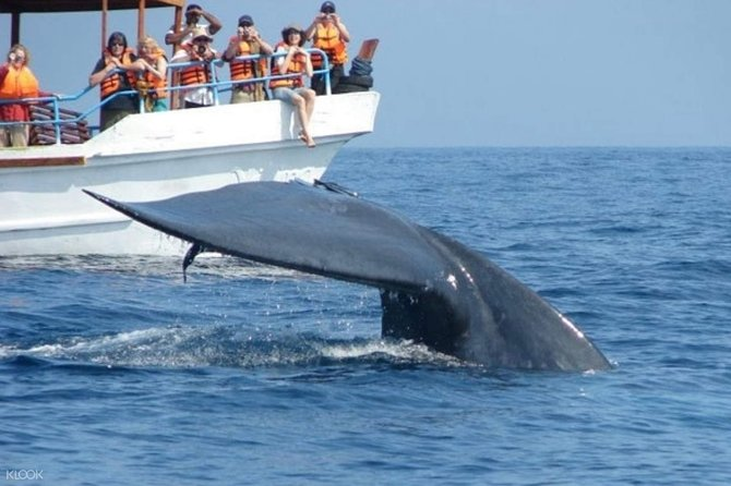 Mirissa Whale Watching Tour From Negombo