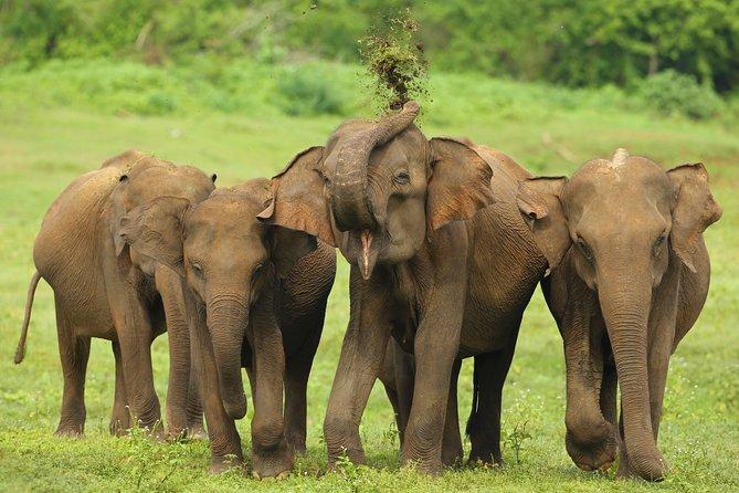 Udawalawe Safari Tour From Tangalla