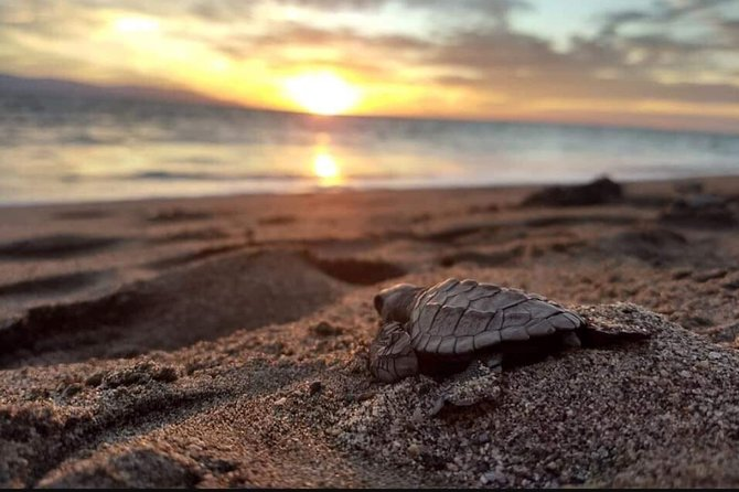 Encounter with the nature at the sea turtle camp