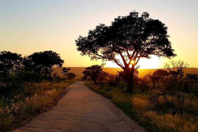 5-Day Private Safaris in Kruger National Park