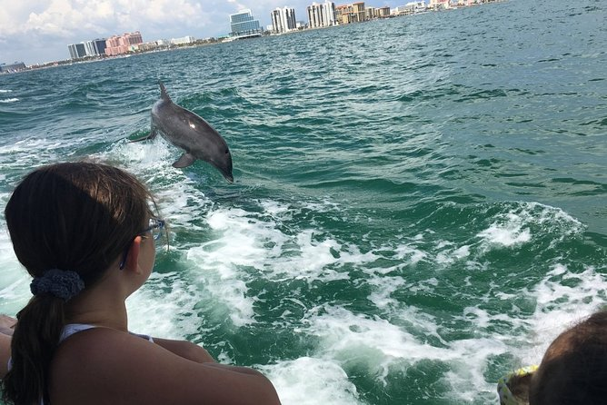 Dolphin Adventure at Clearwater Beach